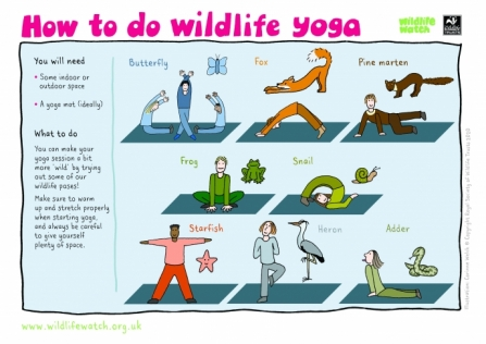 Wildlife Yoga