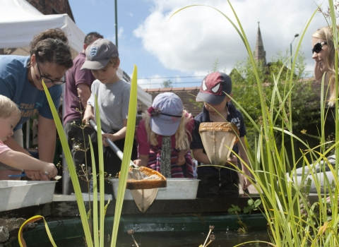 Pond dipping © Amy Lewis