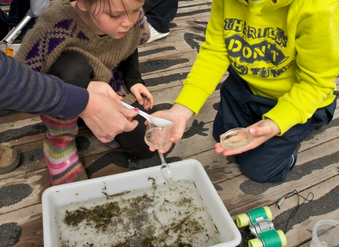 Pond dipping at Winnall Moors
