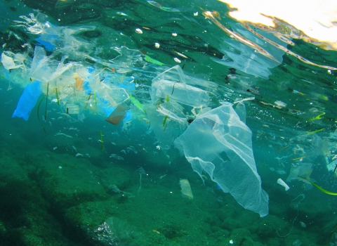 Plastic litter in our oceans