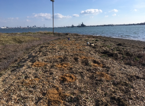 Improved shingle spits with sand patches on Pewit Island