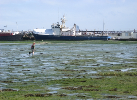 Surveying for seagrass on the Solent coast