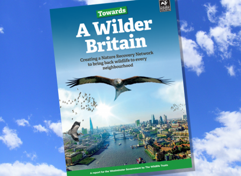 Towards a Wilder Britain report
