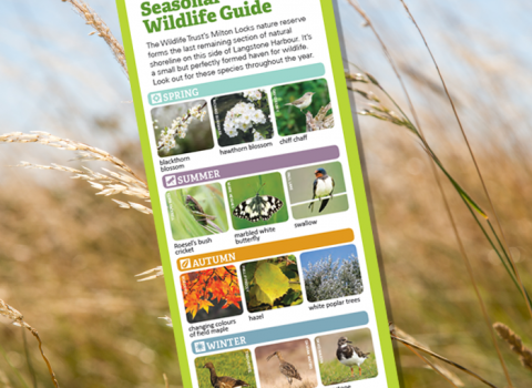 Seasonal wildlife guide for Milton Locks