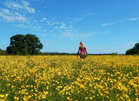 Testwood buttercup meadow © Cathy Anning