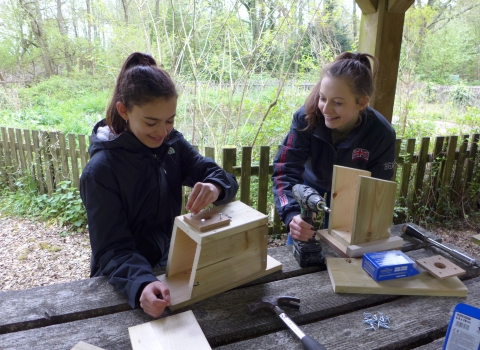 Young Naturalists woodwork © T Standish
