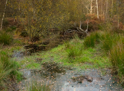 Image of pond in Pamber Forest by Peter Emery