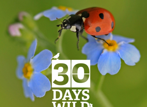 30 Days Wild © Jon Hawkins / Surrey Hills Photography