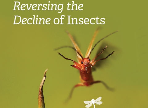 Reversing the Decline of Insects Report